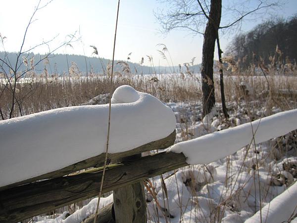 20010123 Winter Walk