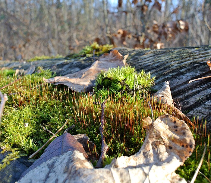 Moss-covered wood