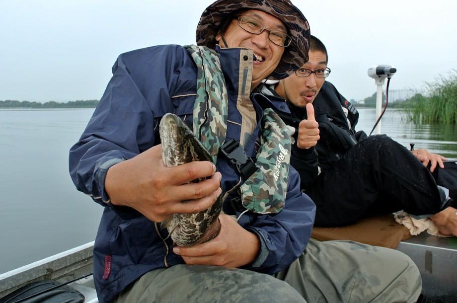 Biwako Snakehead