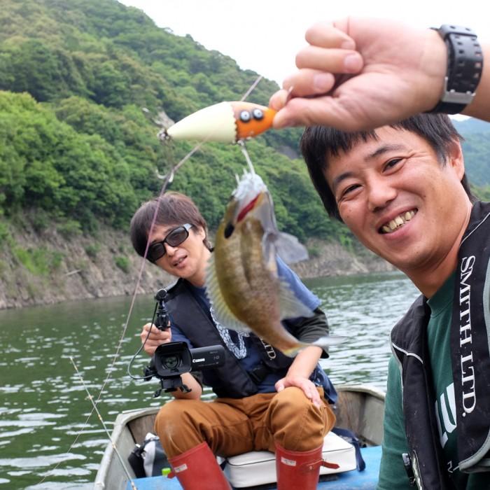 Tsubayama Dam Bluegill