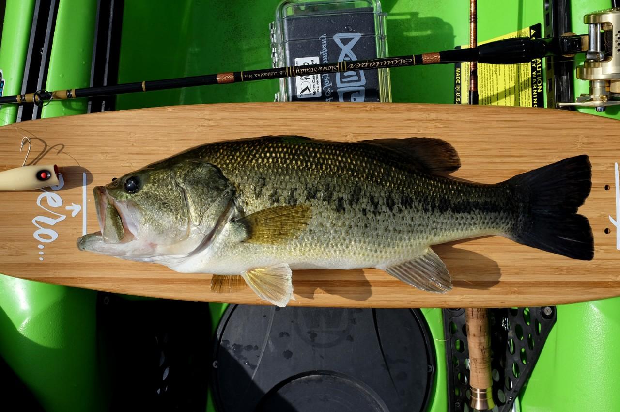Encinarejo Bass