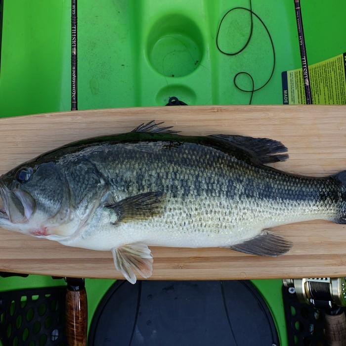 Guadalmellato Bass