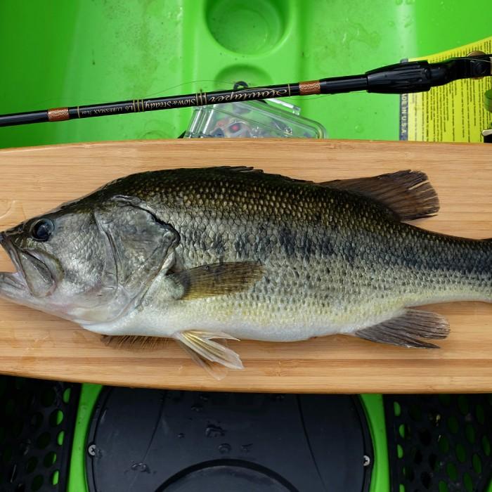 Jandula Bass