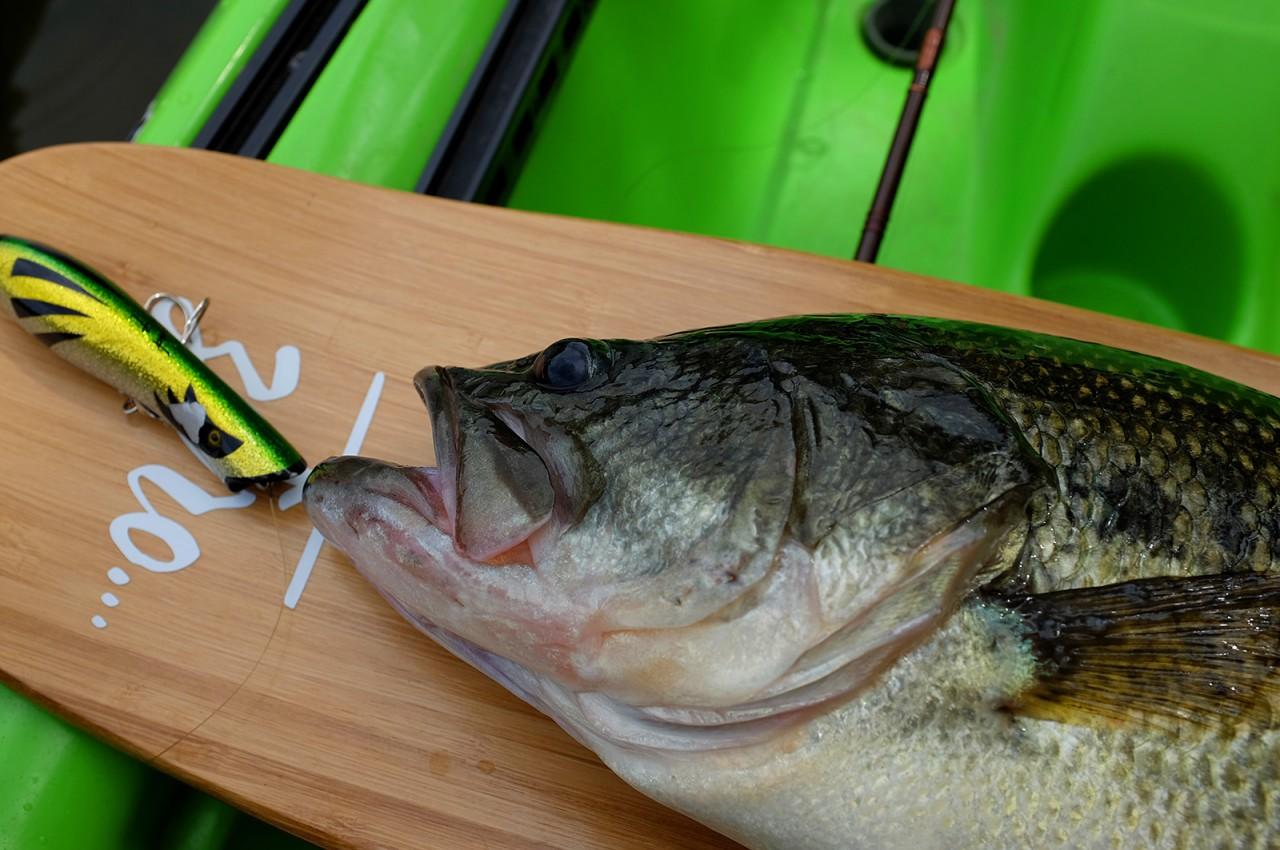 Navallaña Bass